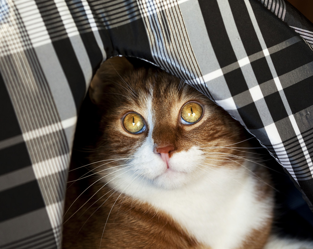 5 Triggers That Cause Your Cat Stress